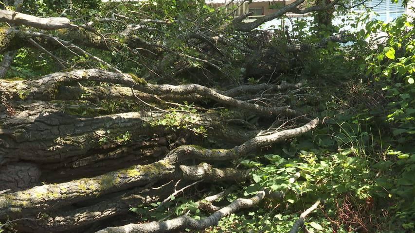 Schandfleck: Ärger bei Quartierbewohnern in Bronschhofen