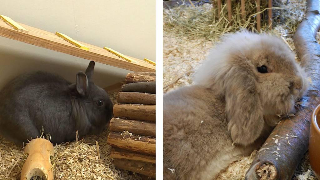 Kaninchen Gioia & Leo