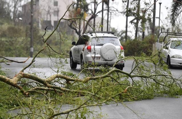 In der Stadt Airlie im Bundesstaat Queensland wurden Häuser beschädigt und Bäume umgeknickt.