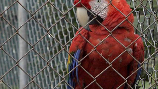 Polizei befreit Tiere aus privatem Zoo (Symbolbild)