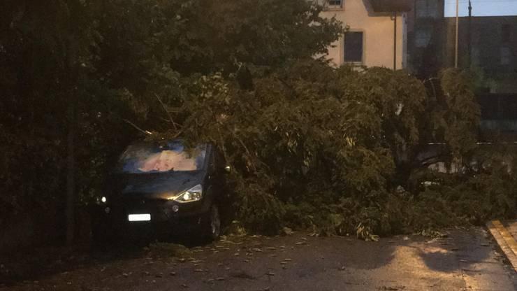 In Arbon TG brachten die heftigen Sturmböen einen Baum zu Fall.