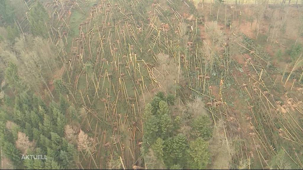 Sturm Burglind: Solothurn investiert über 2 Mio. Franken in Wald