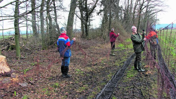 Die freiwilligen Helfer spannen die Netze für die Feldhasen-Fangaktion auf.