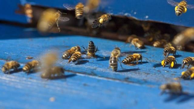 Durch einen nationalen Gesundheitsdienst soll das Bienensterben reduziert werden