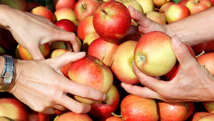 Äpfel – ein zentrales Thema am herbstlichen Naturpark-Märet.