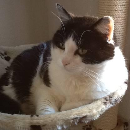 Gemäss Jenny ist die Katze eher zurückhaltend gegenüber fremden.