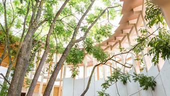 Das auffällige «Baumhuus» an der Badenfahrt: Steht es künftig im Surbtal?