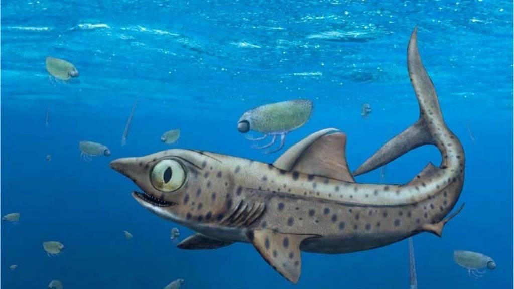 Eine Visualisierung eines Urzeit-Hais, bei dem die älteren Zähen gut sichtbar senkrecht auf dem Kiefer standen. Die schärferen Zähne zeigten gut versteckt in Richtung Zunge.