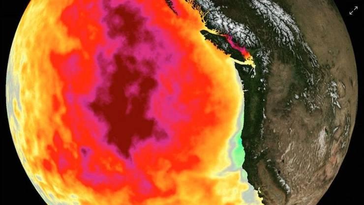 Der «Blob» auf dem Satellitenbild der NASA.