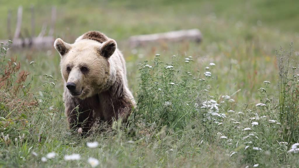 Arosa-Bärenland feiert Einjähriges