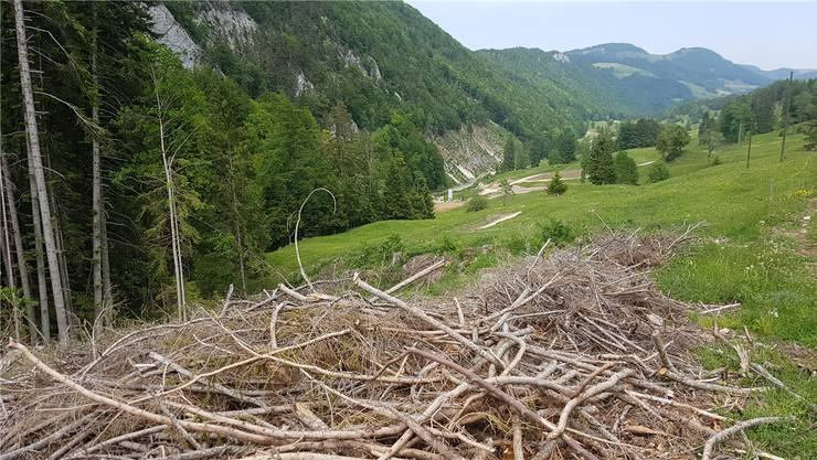 Der anspruchsvollste Bereich steht noch bevor: Entlang des Waldrandes wird die Scheltenstrasse künftig emporsteigen.
