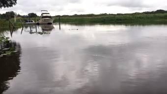 Von Ungeheuern heimgesucht? Die Vorkommnisse in einem See in Florida.