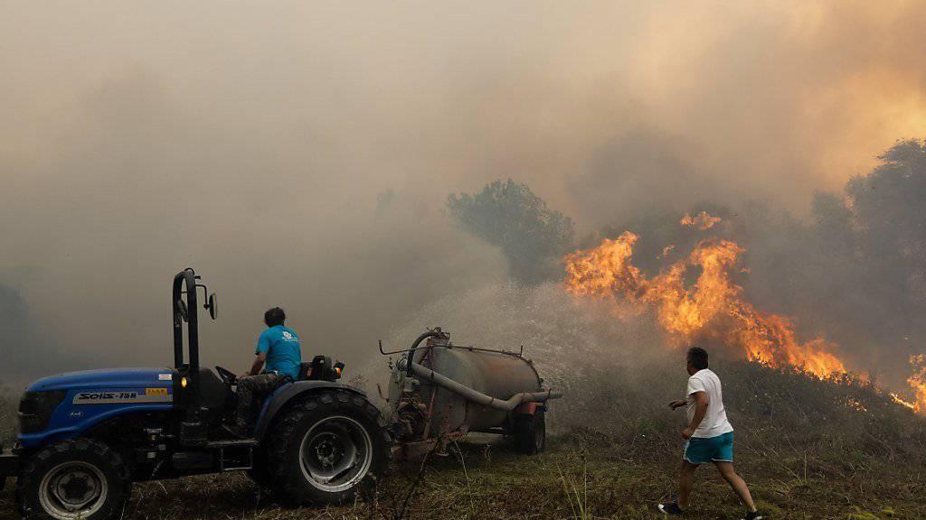 Selbsthilfe im Kampf gegen die Feuer in Portugal