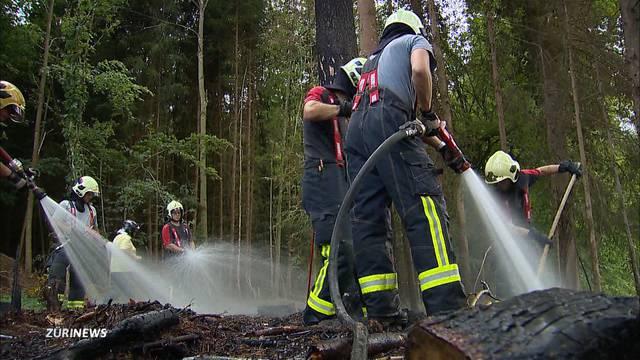 Brandstiftung vermutet: Mehrere Waldbrände im Thurgau
