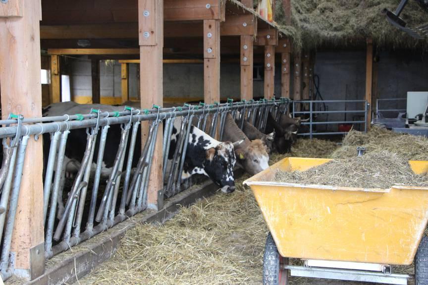 Zur Weissküferei gehört auch eine Landwirschaft. (Bild: Angela Müller/FM1Today)