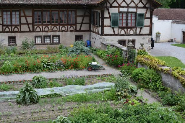 Das heiss-feuchte Wetter der vergangenen Wochen hat im Klostergarten die Pflanzen in die Höhe schiessen lassen.
