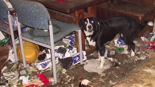 Tierhalteverbot-Rekord im Aargau