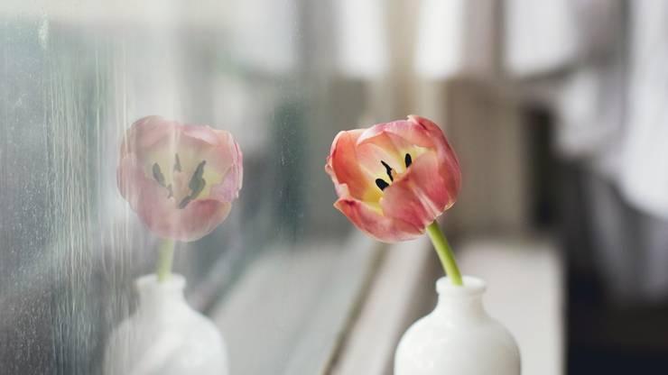 Schnittblumen nie direkter Sonne aussetzen, sie mögen auch keinen Durchzug.