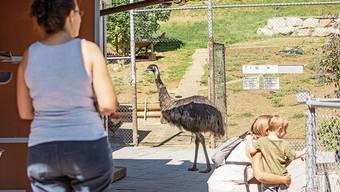 Der Tierpark soll auch in Zukunft ein Ausflugsziel bleiben. Die Frage ist, mit welchem Angebot.