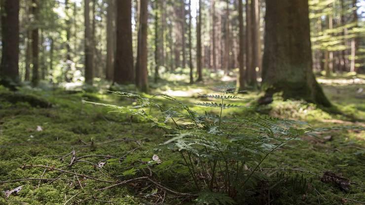 Der Kanton will die Entschädigungen im Aargau pro Hektare Wald erhöhen. (Symbolbild)