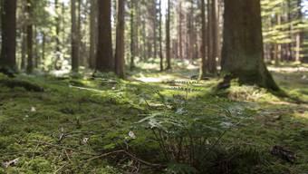 Der Mann hatte im Wald mit einer Pistole gedroht. (Symbolbild)