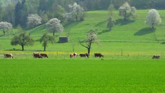 Es blüht und grünt - Frühlings Landschaft usem Aargau