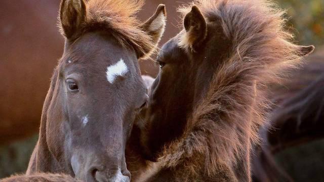 Rahel und Roland Helfenberger vom Haldenhof wollen auf einen Pferdebetrieb umstellen. (Symbolbild)