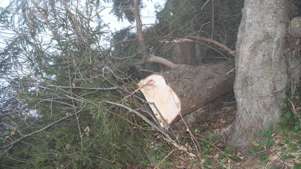 Mann beim Holzen von Baum getroffen und schwer verletzt