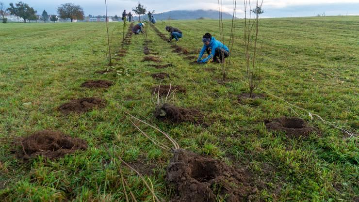 Mittels zwei Pflanzlochbohrern wurden sämtliche Löcher zuerst ausgehoben, bevor die Vereinsmitglieder des NVVH die heimischen Sträucher einsetzten.