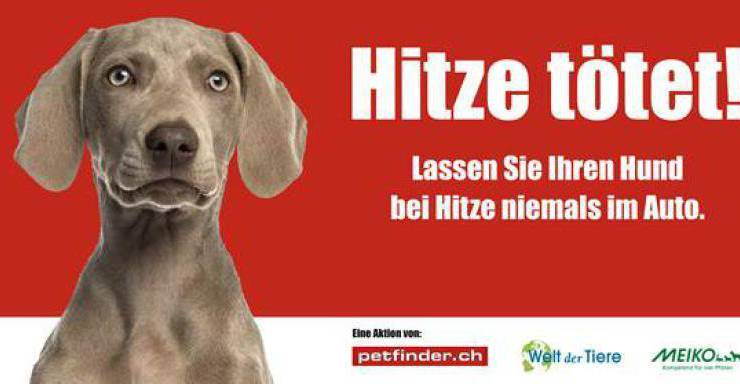 Dieses Plakat ist in der ganzen Deutschschweiz zu sehen, um au diese Thematik aufmerksam zu machen.