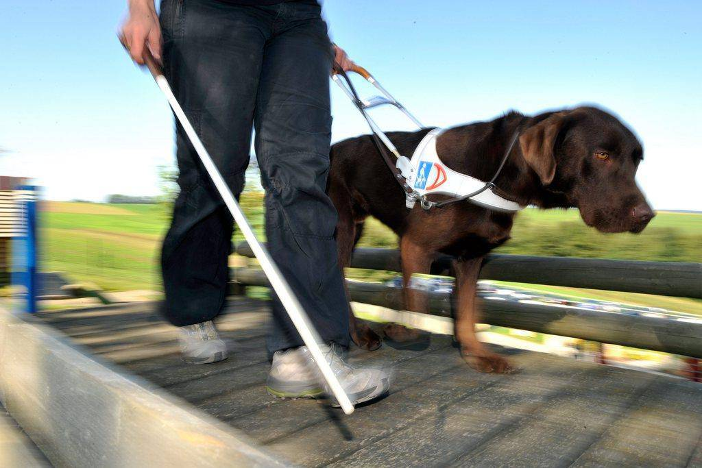 Blindenhunde (© keystone)