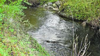 Die Suhre wird im Zuge des Hochwasserprojekts revitalisiert.