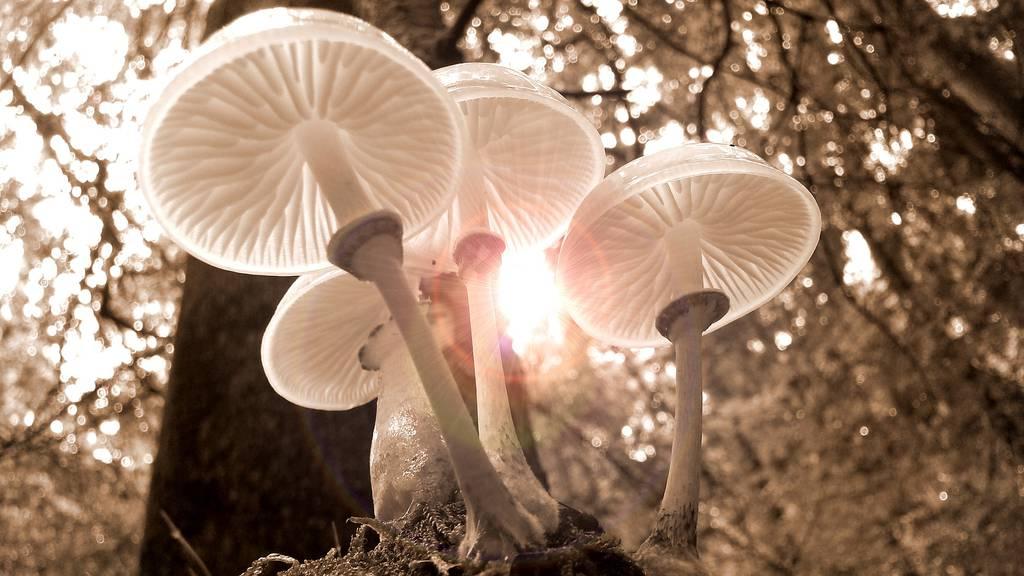 Pilze Wald