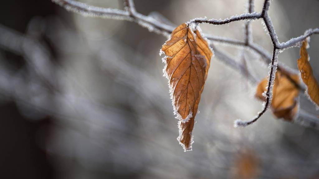 Kaum ist der Herbst da, sagt der Winter kurz Hallo