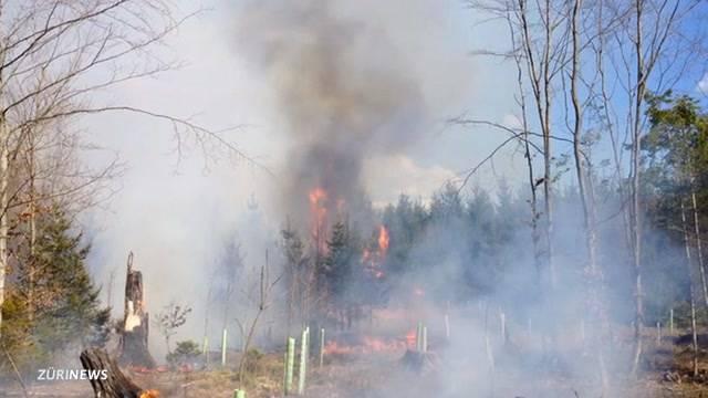 Hohe Waldbrandgefahr in vielen Teilen der Schweiz