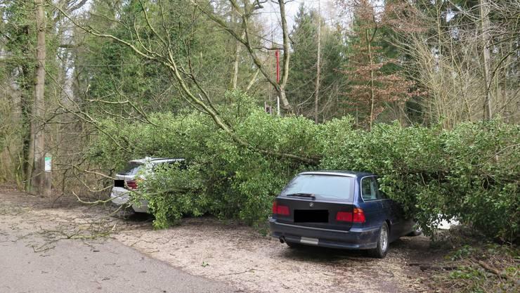In Muttenz an der Rheinfelderstrasse liess der Wind einen grossen Baum auf zwei parkierte Autos krachen.