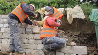 Trockensteinmauern für die Rebbauern und die Schlingnattern