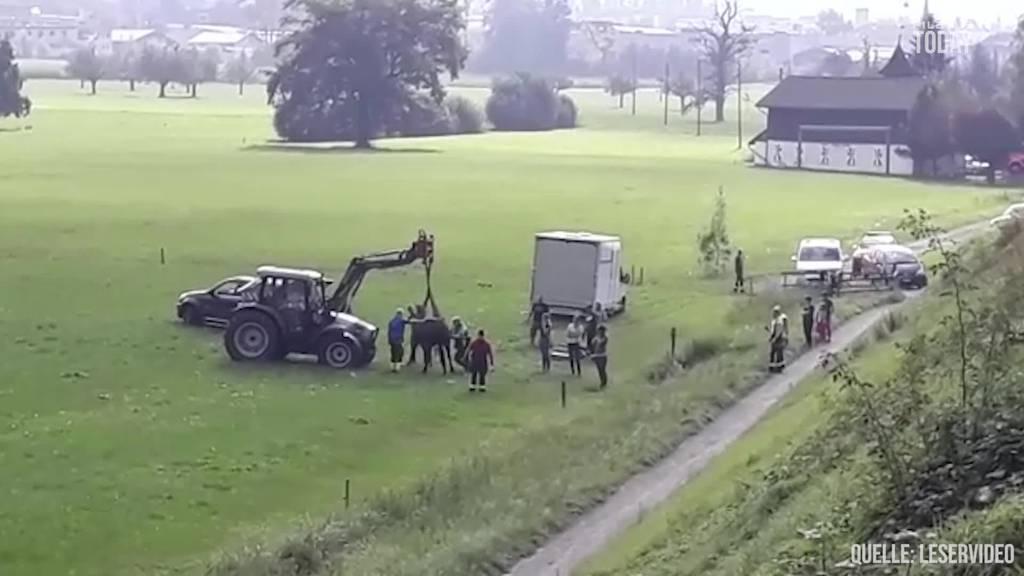 Hier wird ein Pferd aus einer misslichen Lage befreit