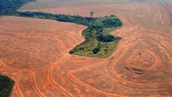 Gerade in Brasilien schreitet die Zerstörung des Regenwaldes unablässig voran (Archiv)