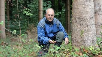 Frank Hämmerli sucht auf den Brombeerblättern nach Bohrmehl