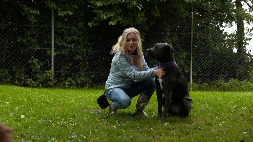 Hunde willkommen / Seltene Tierart mit Jö-Effekt