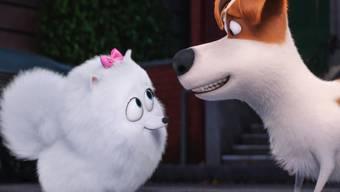 Gidget (links) und Max (rechts) finden Schweizer Kinogänger offensichtlich süss: Am Startwochenende entschieden sich etwa 40 Prozent der Schweizer Kinogänger für den Animationsfilm. (Archivbild)