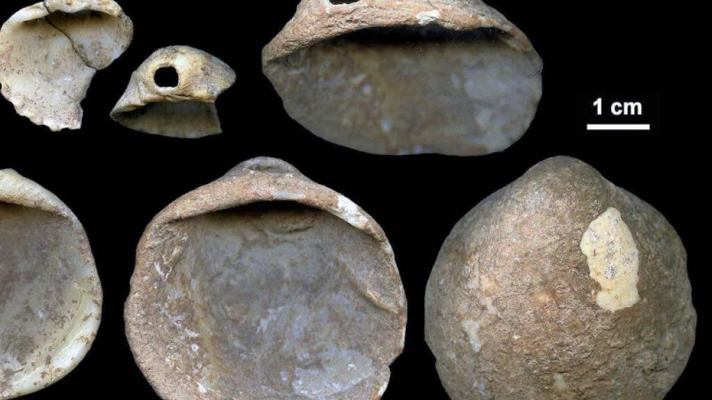 Muscheln, die vor rund 115'000 Jahren von Neandertalern durchbohrt wurden. Sie und ebenfalls entdeckte Höhlenmalereien sind ein Hinweis darauf, dass Neandertaler und moderne Menschen dieselben kognitiven Fähigkeiten hatten.