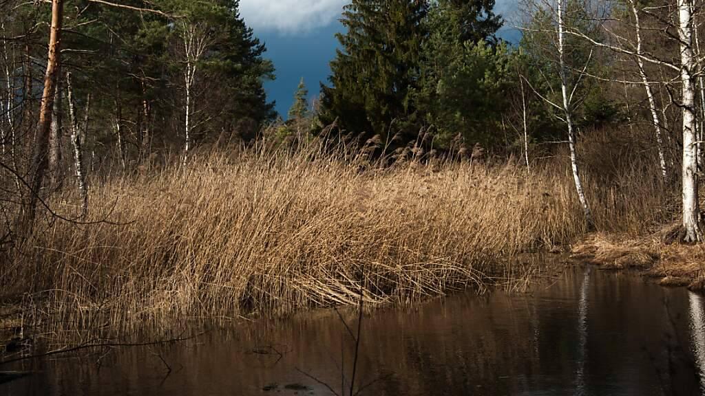 Ab sofort patrouillieren Ranger auch im Hudelmoos bei Amriswil. Sie sollen die Besucherinnen und Besucher über für ein angemessenes Verhalten sensibilisieren.