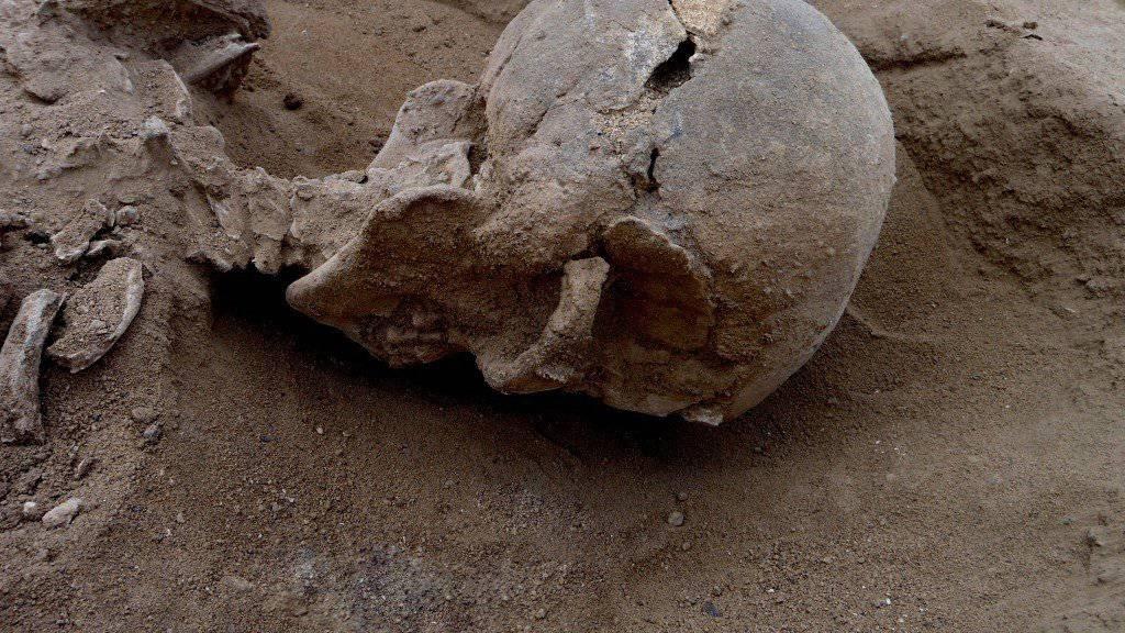 Der Schädel eines Mannes zeigt mehrere Verletzungen, die vermutlich von einem stumpfen Gegenstand wie einer Keule herrühren.