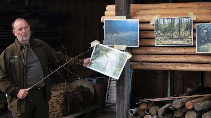 Exkursionsleiter Hans Döbeli von der Jagdverwaltung des Kantons weiss viel zu den Wildtieren zu erzählen.