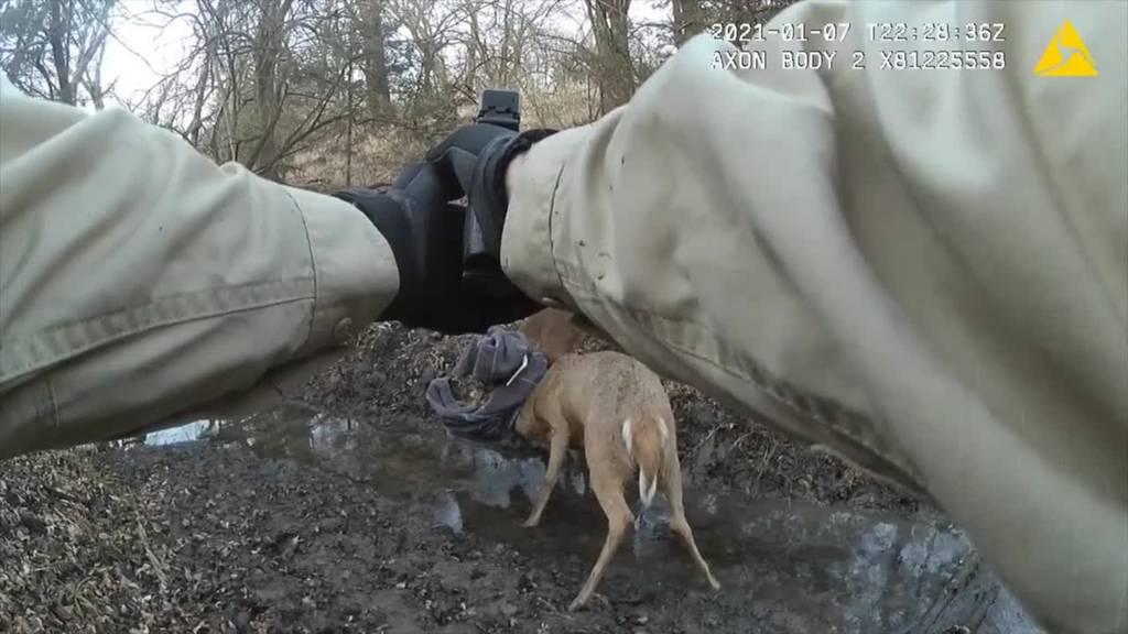 Wildhüter rettet mit einem riskanten Schuss zwei Hirsche