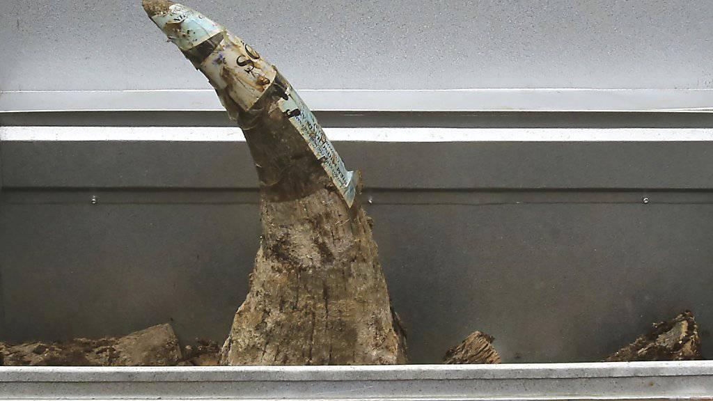 125 Kilogramm Nashorn-Hörner in Vietnam beschlagnahmt