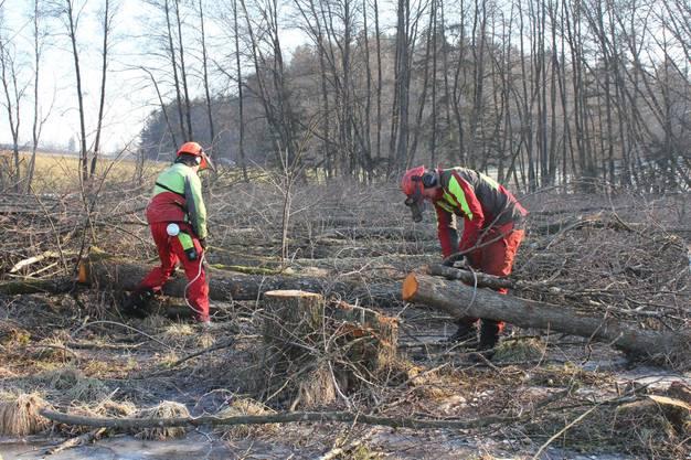 Arbeiter hängen Baumstämme an das Stahlseil