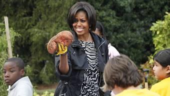 Im Küchengarten der First Lady beim Weissen Haus wachsen sie schon - jetzt werden Süsskartoffeln auch in der Schweiz getestet.
